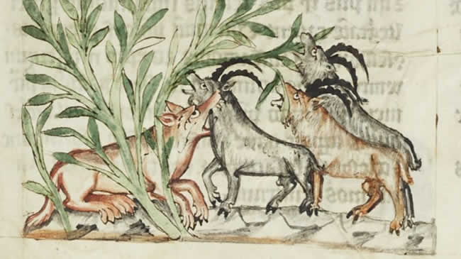 Der Wolf im Mittelalter ist eine immer wieder kehrende Bedrohung.